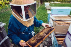 Bee Keeping on 'The Art of Beeing Tour', Image: Tee Byford